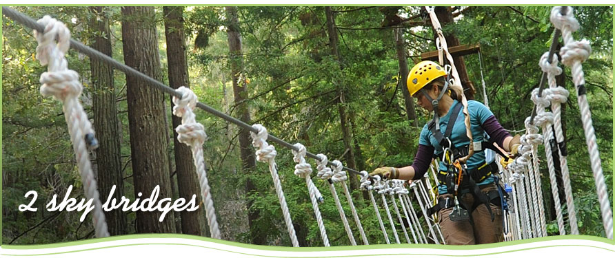 Coastal Redwoods, Rappelling, Sky bridge, Green tours, Eco tours, Eco-tourism, Environmental tours